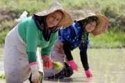 همت 475 هزار زن گیلانی در تولید 55 درصد محصولات کشاورزی و دامی
