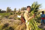 رونق مشاغل سنتی منطقه به دستان کارآفرین برتر سیستان و بلوچستان