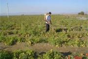 رشد 4 برابری صادرات آب مجازی کشور