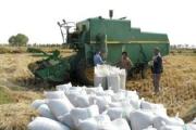 حمایت وزارت جهاد از برنجکاران فقط روی کاغذ است