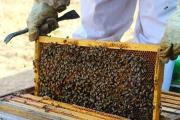 شهد شیرین عسل با طعم اقتصاد مقاومتی