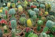 توسعه کشت گلخانه ای راهکاری برای اشتغالزایی جوانان