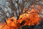 210 هزار اصله از درختان پارک ملی کرخه در آتش سوخته است