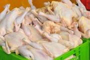 گرانفروشی مرغ در گرمای تابستان